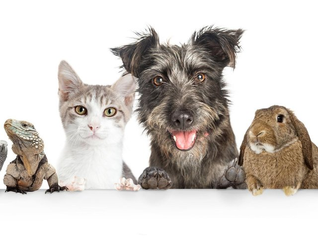Enter our Top Pet competition