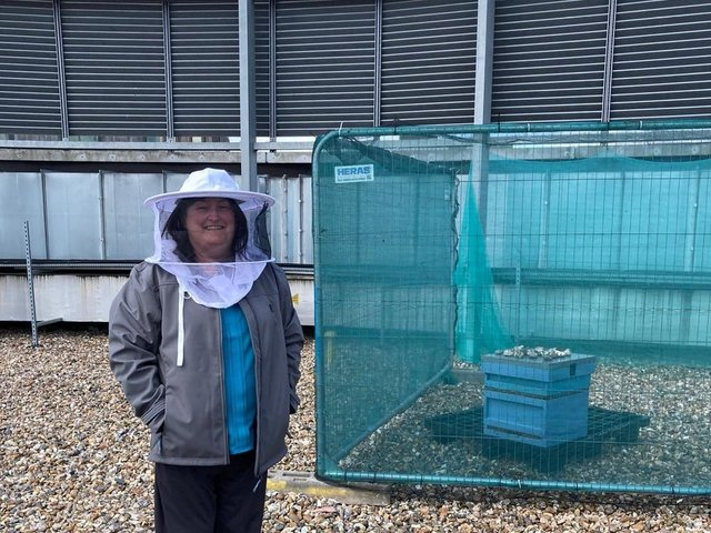 Volunteer Tina with the bees