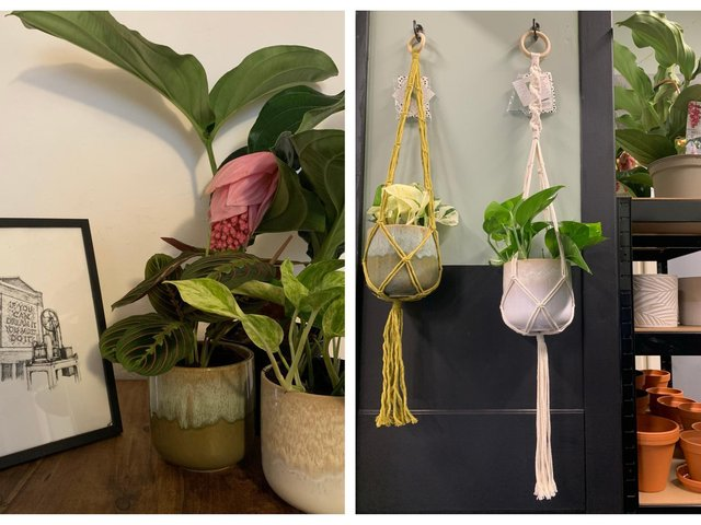 Left: House Planted and Helaena Blanch Art. Right: House Planted and Macrame Love.
